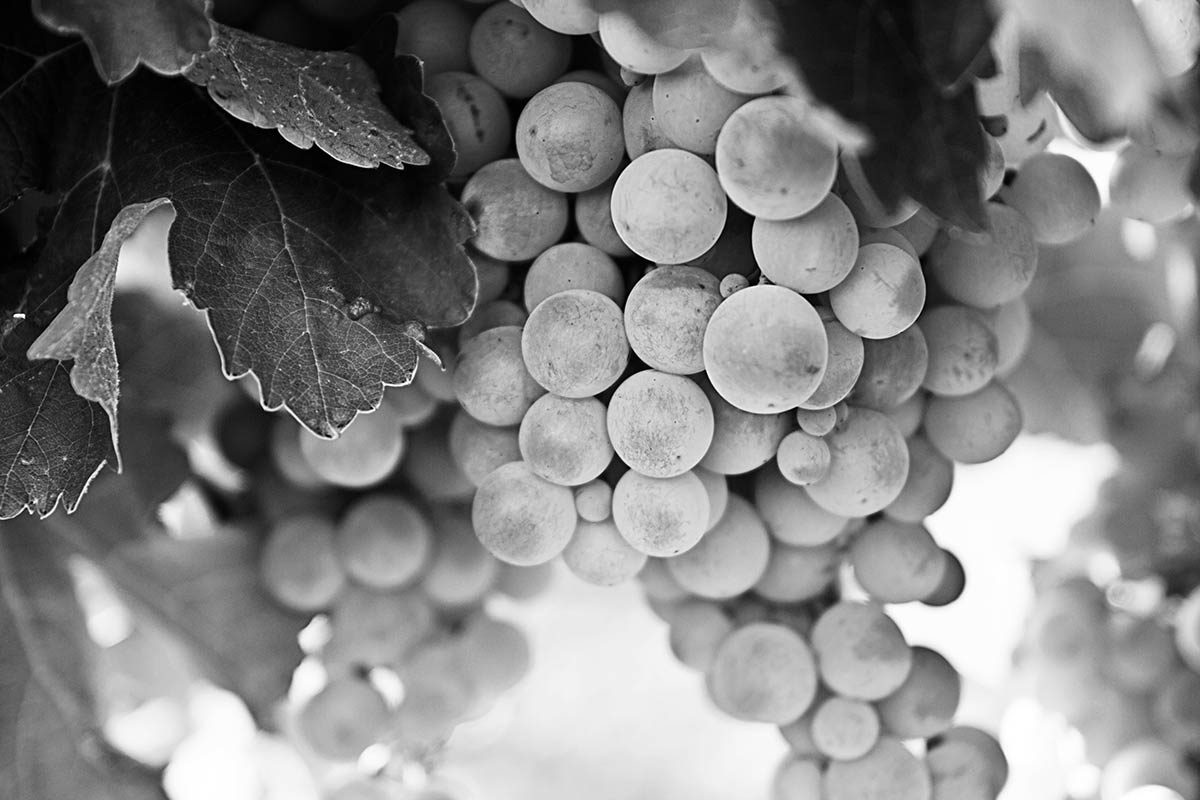 grapes_bw